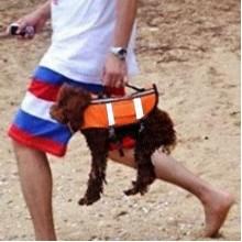 Спасательные жилет для собаки Spass-dog, размер S, собаки до 5 кг, 43х26х32 см